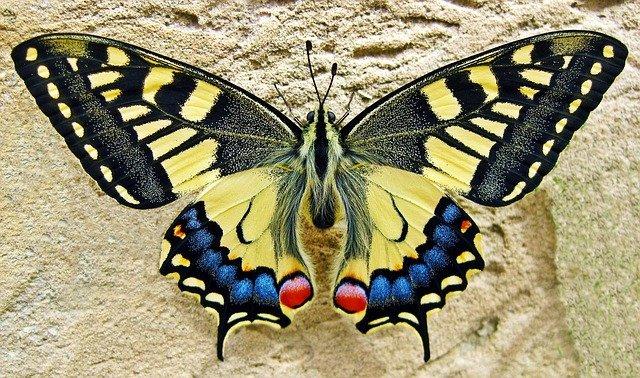 Tropická botanická zahrada upravená jako motýlí dům