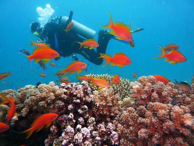 potápěč u ryb.jpg