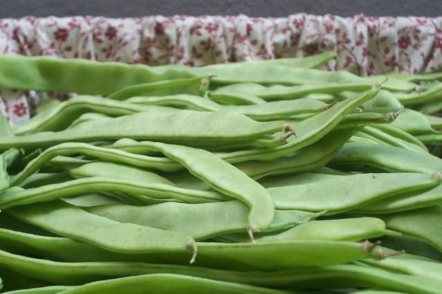 Klíčení fazolí mungo zvýší jejich stravitelnost